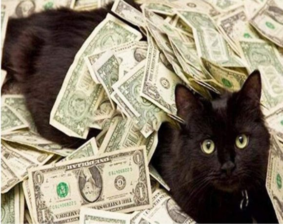 Richest Cat