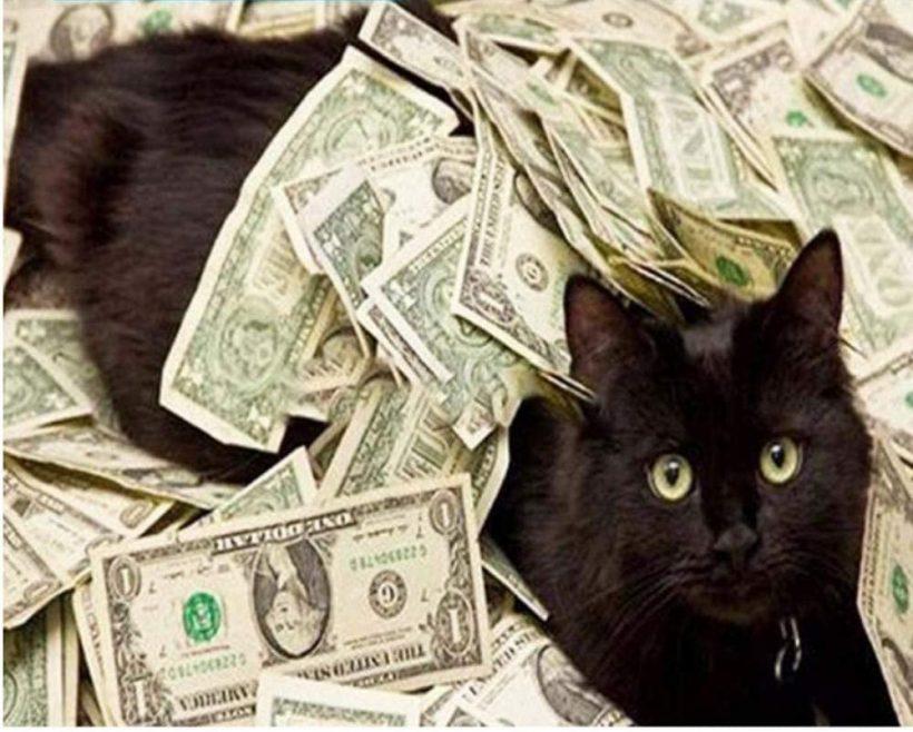 Richest Cat