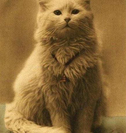 Oldest Photo